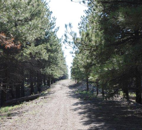 Une très ancienne portion de la Route 66, transformée en sentier de randonnée.